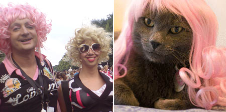 kitty wigs