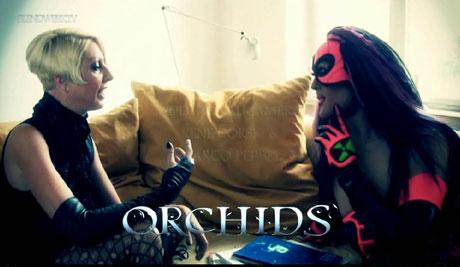 blog_orchidstv03